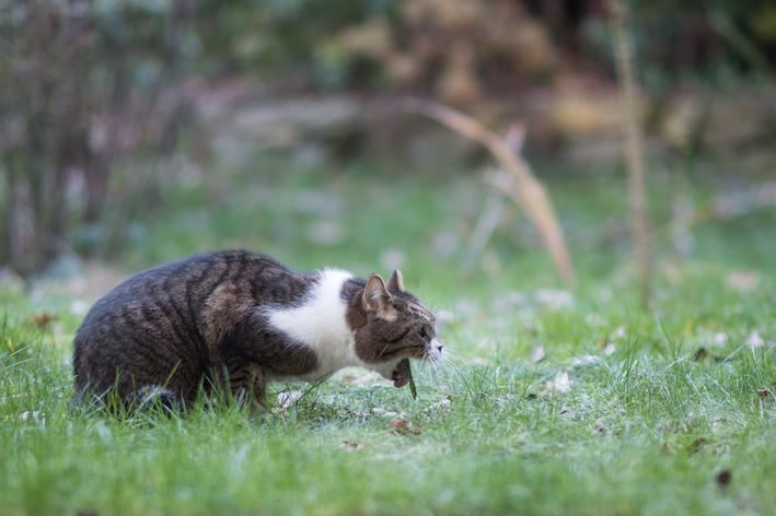 gato vomitando transparente