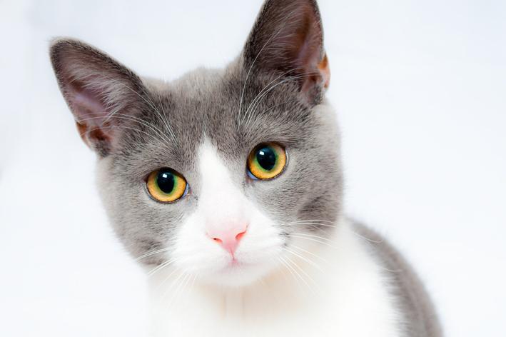 Será que os gatos podem comer pipoca?