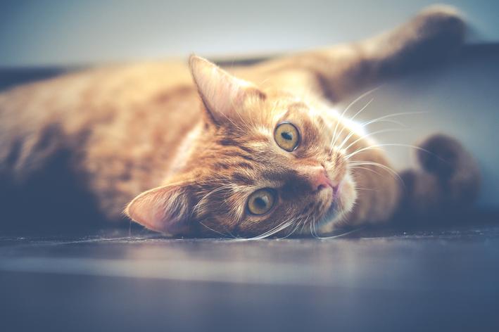 Em que situações gatos podem comer pipoca