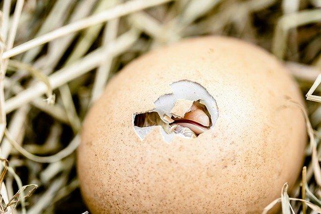 animais que botam ovo