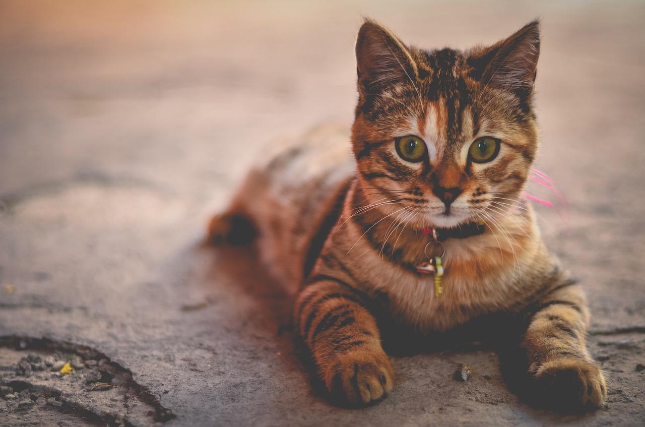 o que fazer quando o gato não quer comer?
