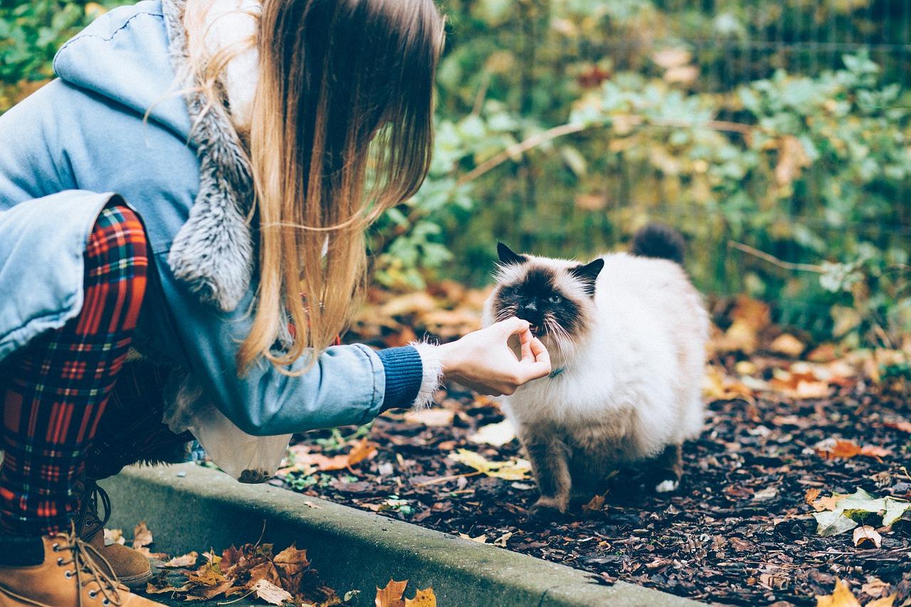 O que significa quando um gato se aproxima de você
