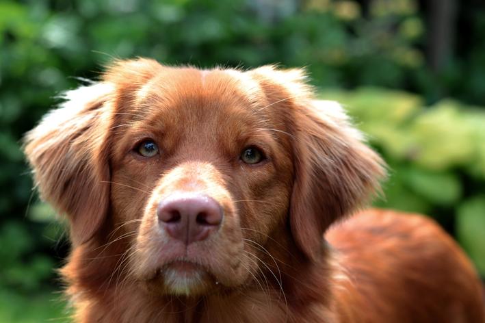 Protetor solar para cachorro: como usar?