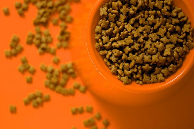 ração natural para gato no comedouro laranja