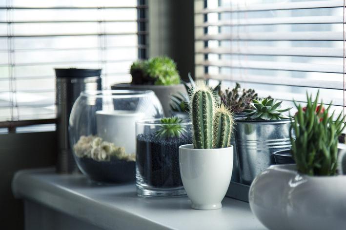 Tamanho de vaso: aprenda a escolher o ideal