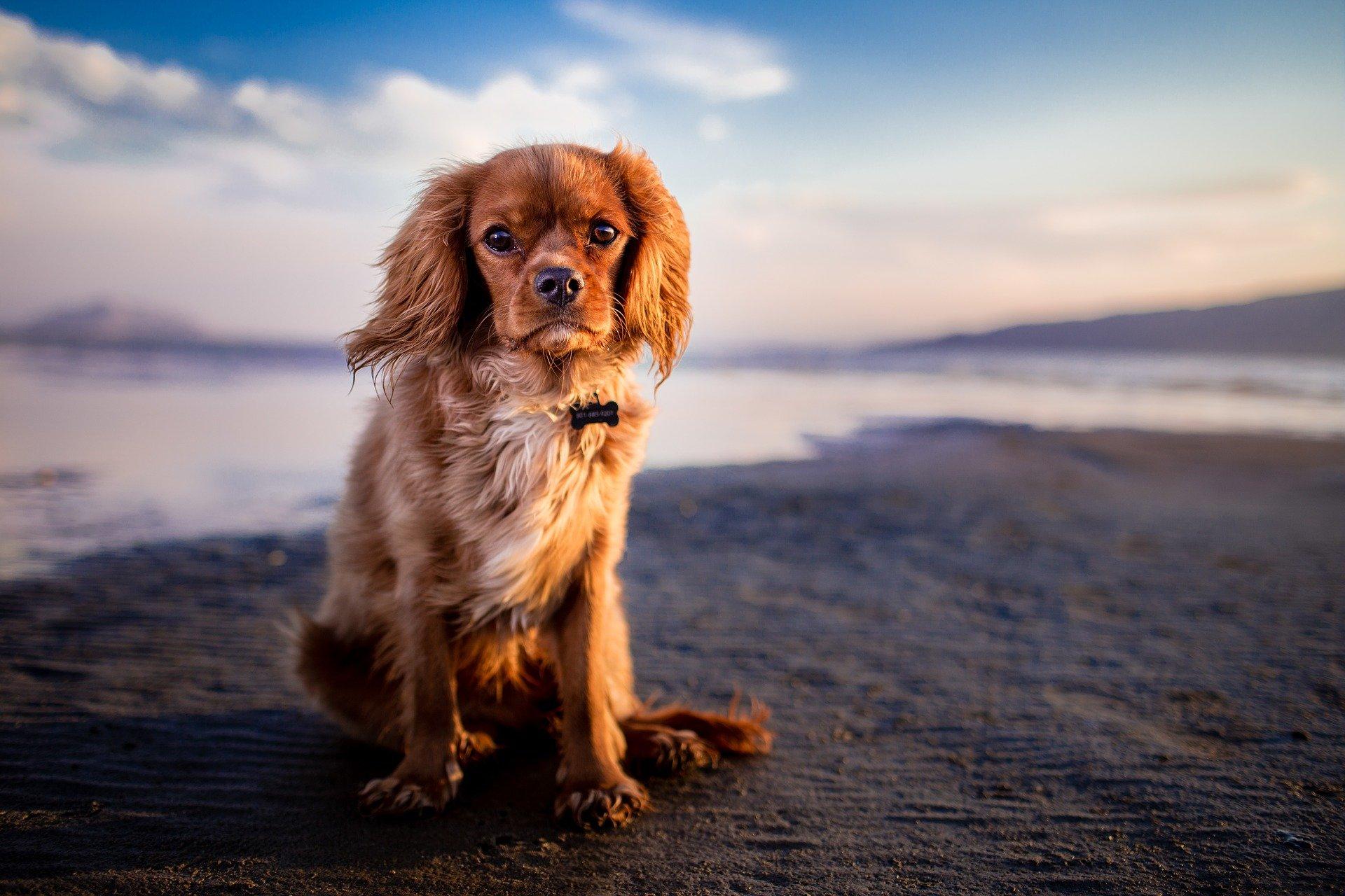 Cachorro com muita remela