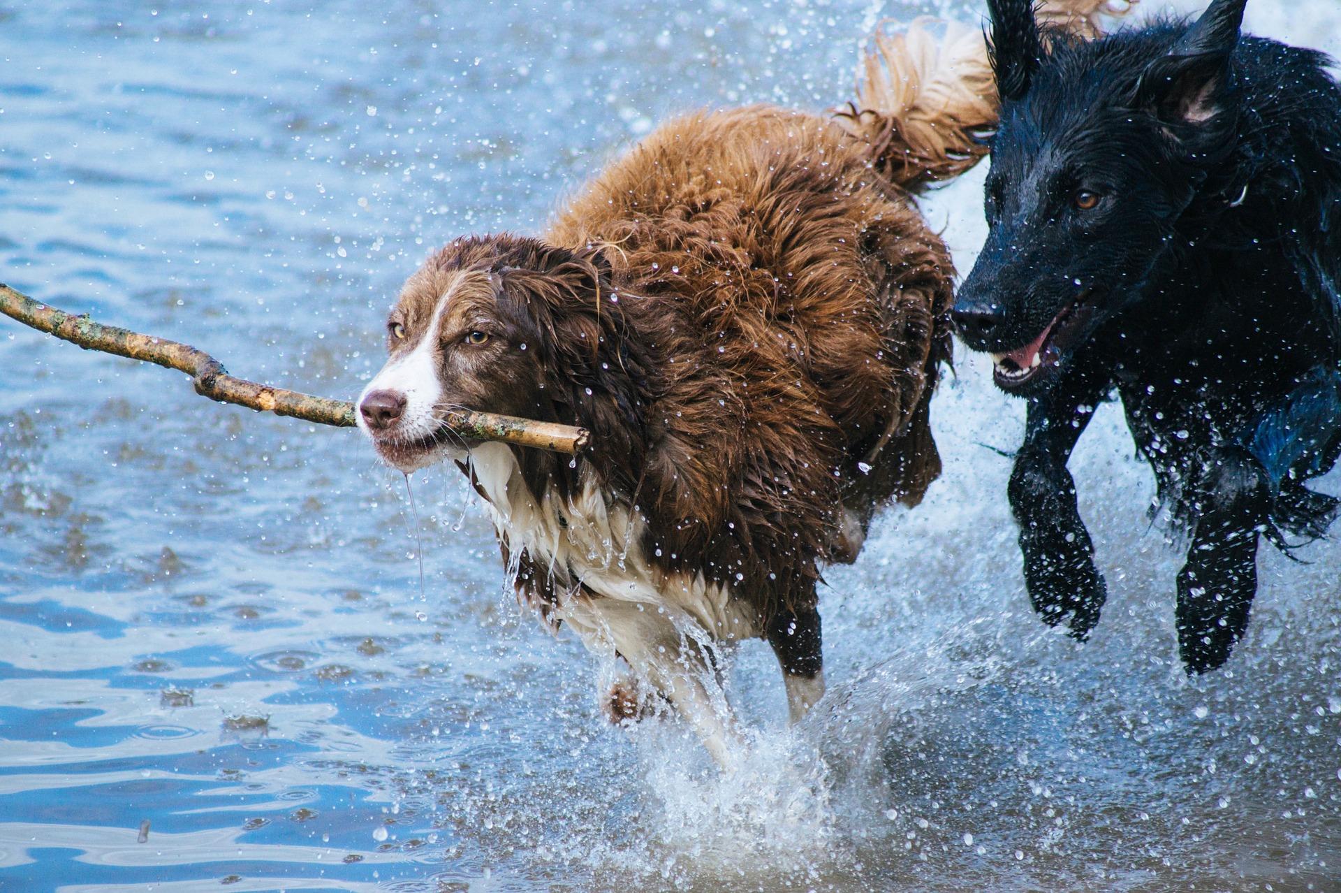 Cachorro mais caro do mundo: conheça 4 raças dessa categoria!