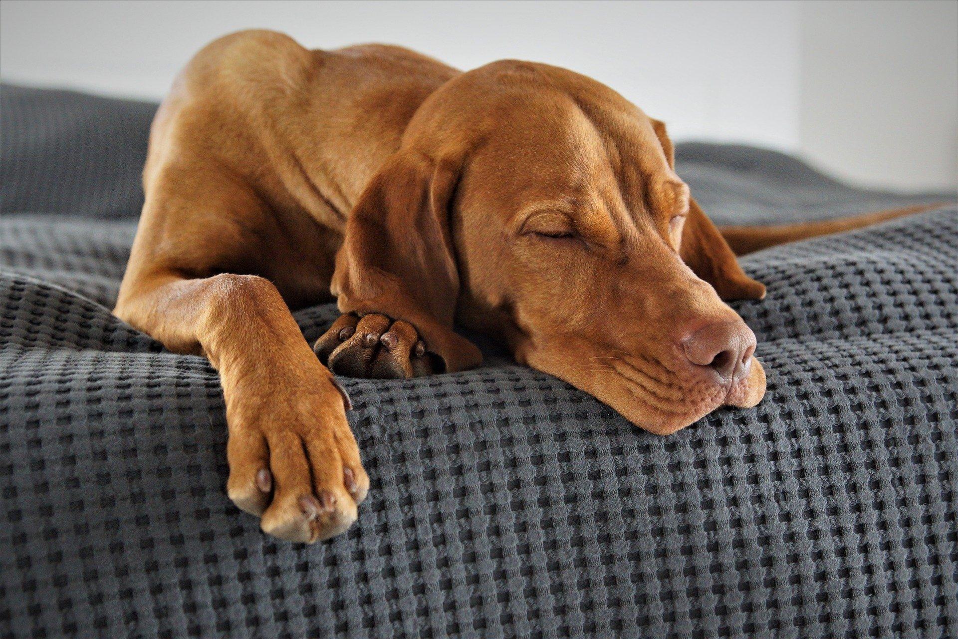 Música para cachorro dormir?