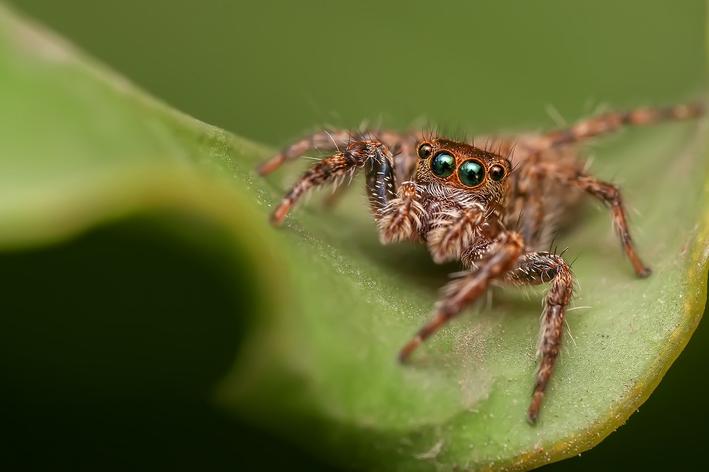 aranha é vertebrado ou invertebrado