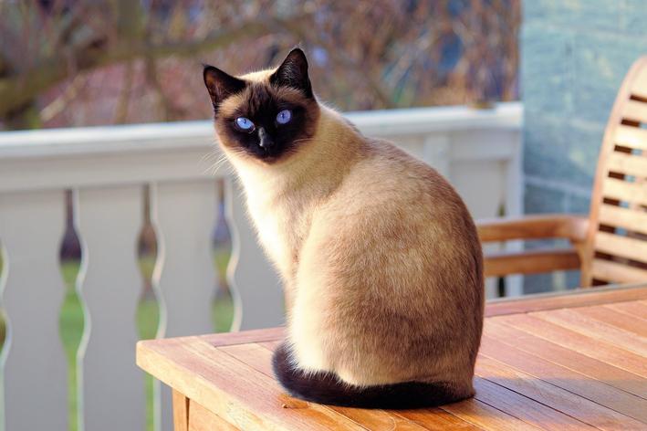 Bronquite em gatos: você sabe o que fazer?