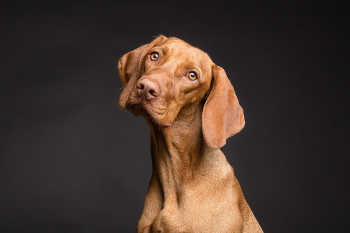 Cachorro pode comer cereja ou não?
