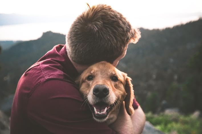Cachorro tem memória: verdade ou mito?
