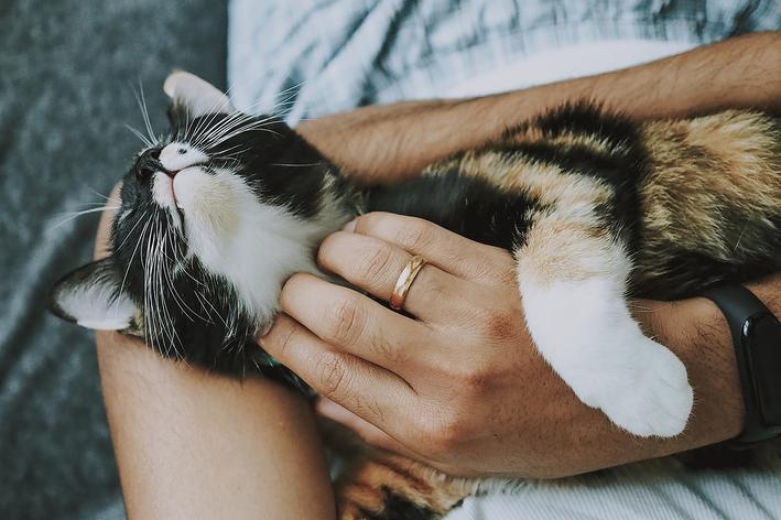 Dicas de como dar remédio líquido para gato sem traumas