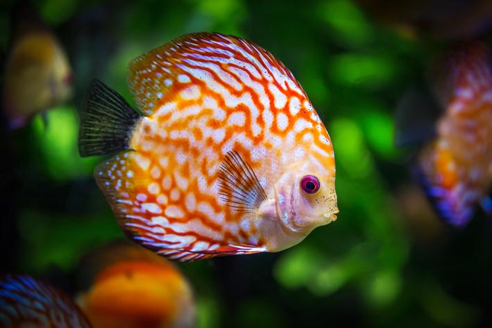 quanto tempo vive um peixe