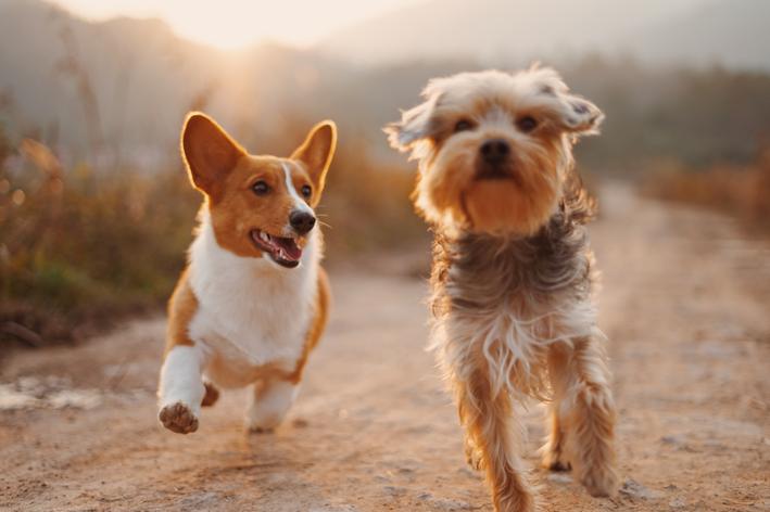 Fibrossarcoma em cães: descubra o que é