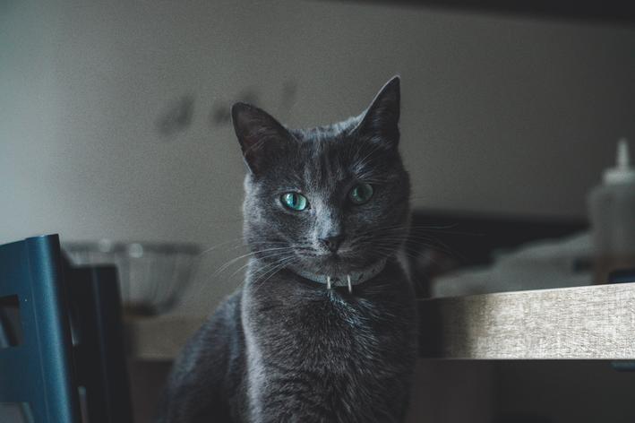 Fibrossarcoma em gatos: você sabe o que é?