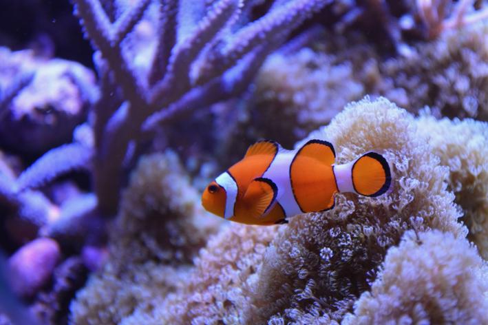 peixe mais bonito do mundo