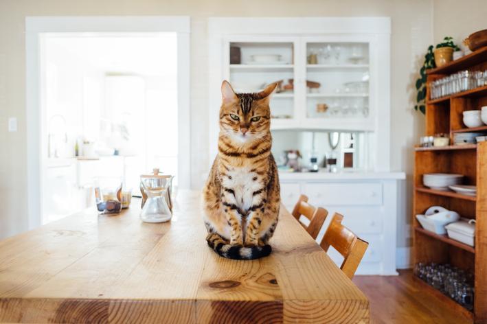 Gato com rabo quebrado: e agora?
