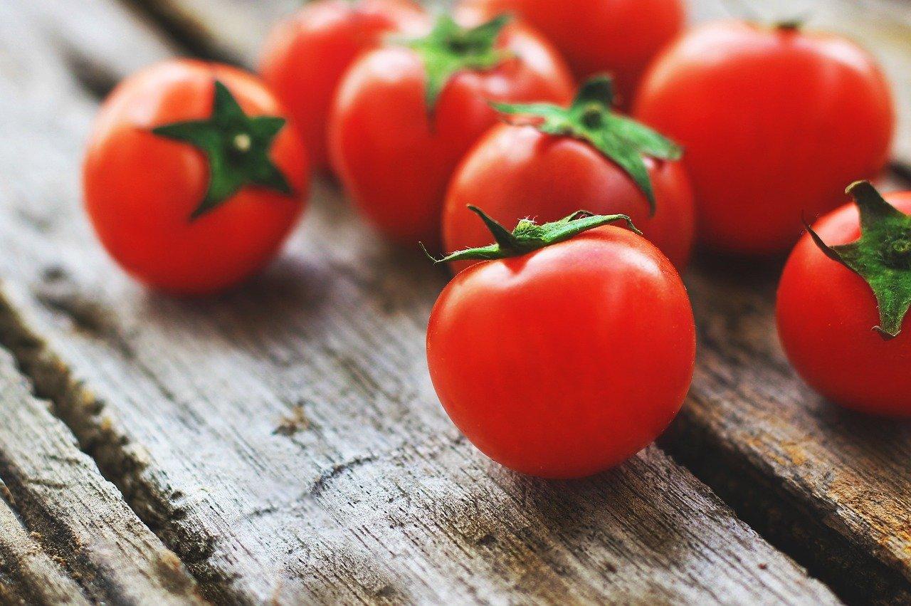 gato pode comer tomate? Não!