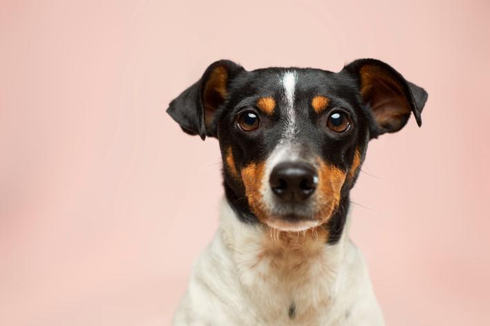 Impetigo em cães: você sabe o que é?