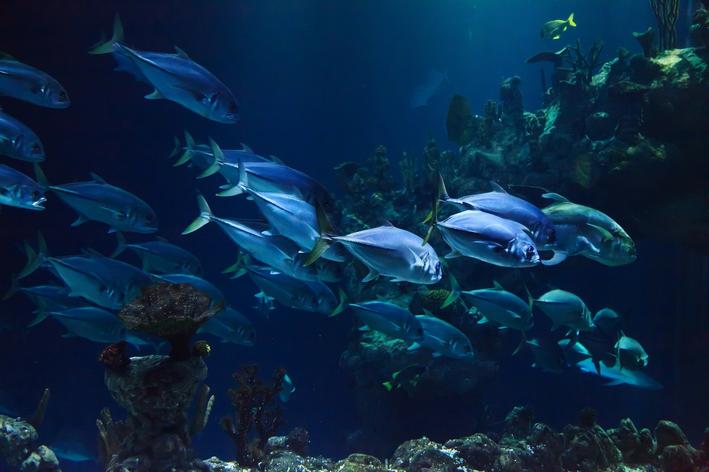 o que são animais aquáticos
