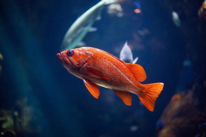 peixe é vertebrado ou invertebrado