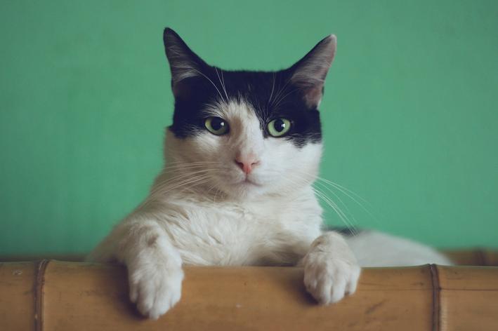Pneumonia em gatos: fique atento ao seu pet