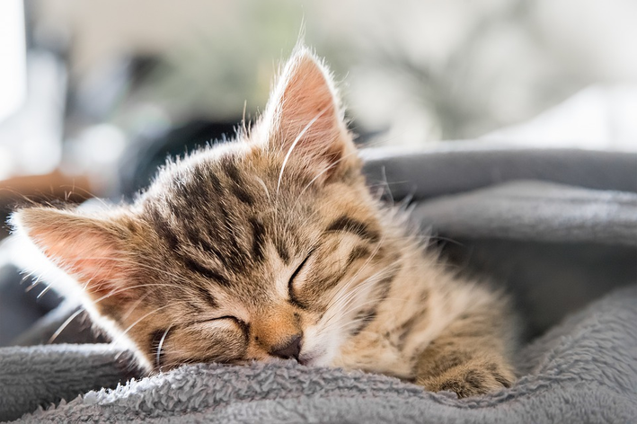 quantas horas um gato dorme por dia