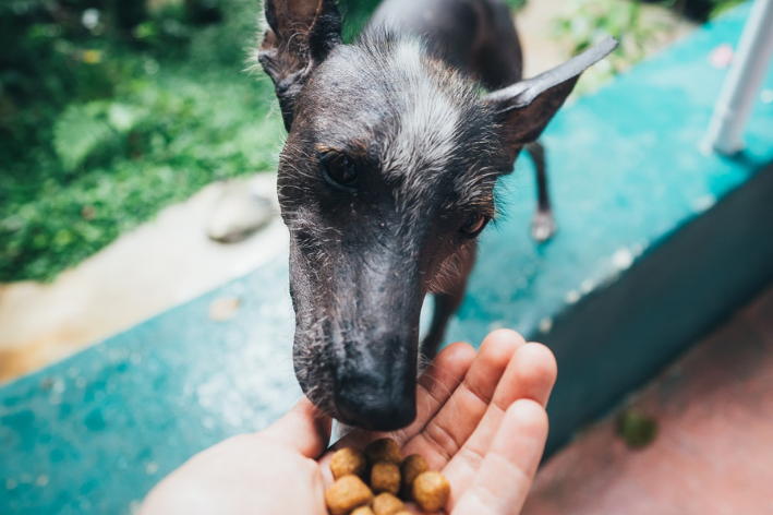 quantas vezes um cachorro deve comer por dia sendo idoso