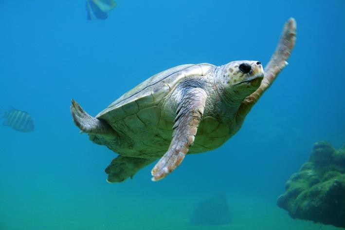 tartaruga é vertebrado ou invertebrado