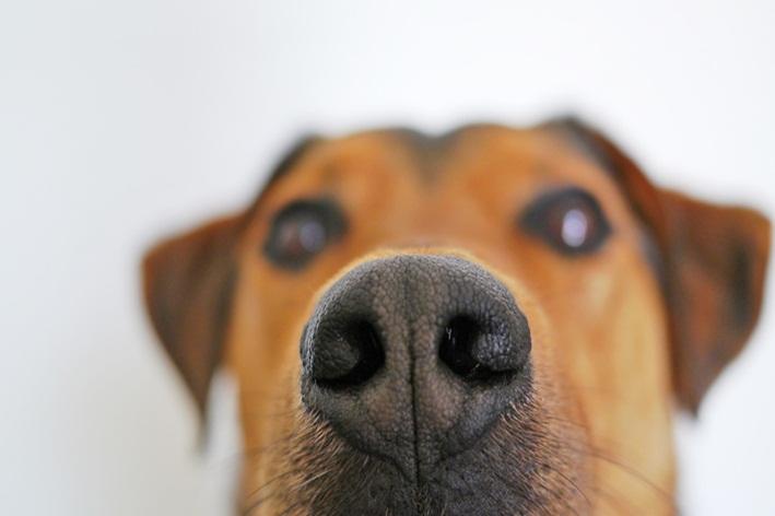 cachorro com cheiro forte na pele