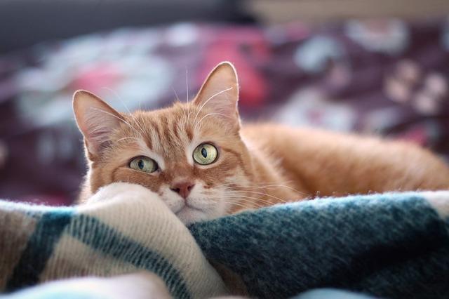 verruga em gato