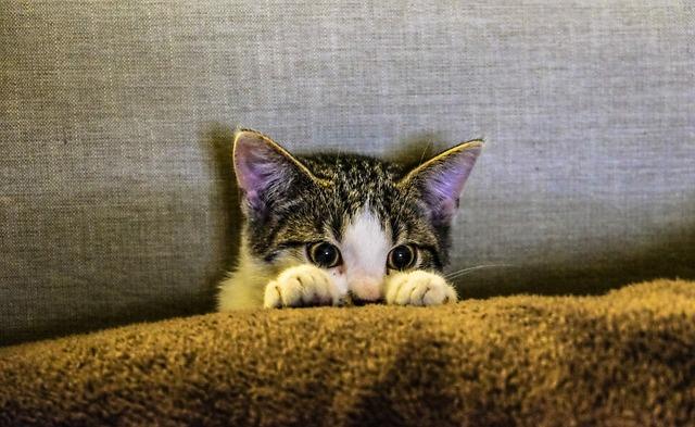 fezes de gato