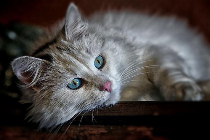 pelo de gato faz mal