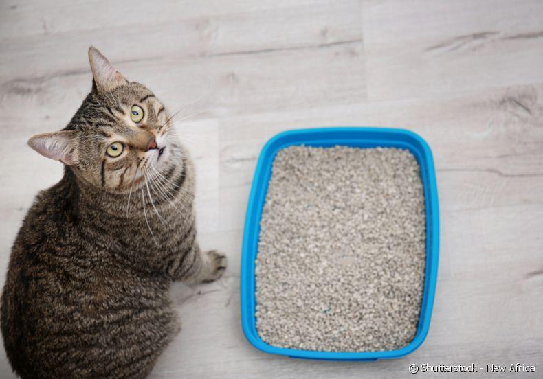 quanto empo dura um saco de areia para gatos